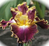 iris-Affair-To-Remember